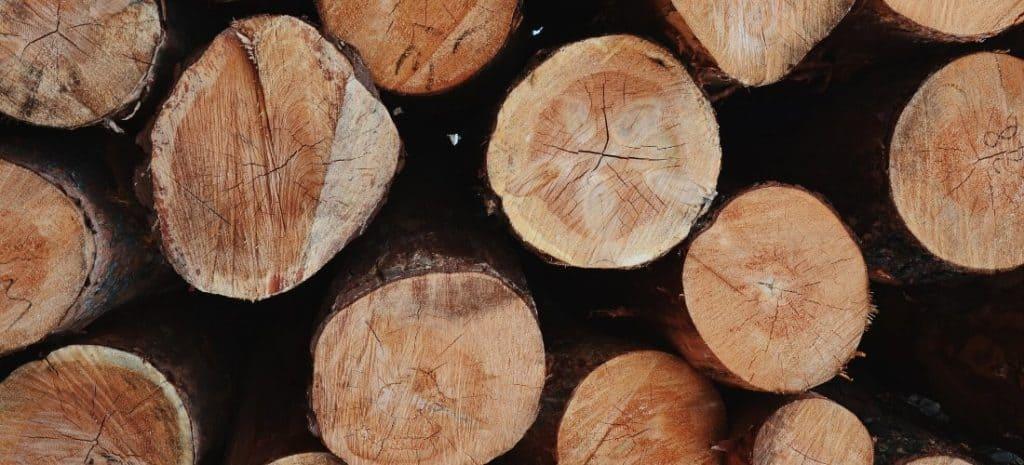 Stack of fresh cut wood